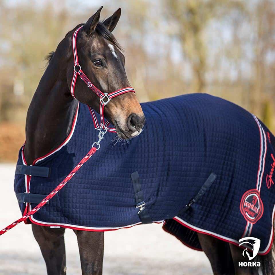 paard Dutch