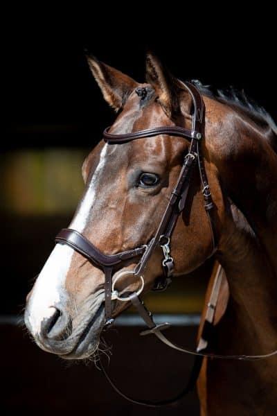 harrys-horse-hoofdstel-release